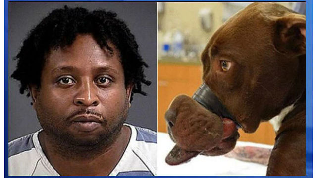 SC man who bound dog's muzzle with tape sentenced to 5 years