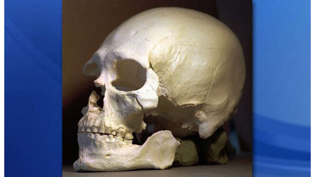 Sheriff: NC resident finds skull lying on ground