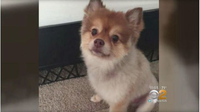 Dog found dead in carrier during Delta Air Lines layover