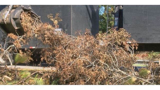 Court blocks company accused of price gouging from providing tree removal services